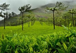 munnar-rainy-season